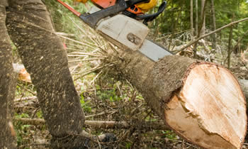 Tree Service in Bradenton FL Tree Service Estimates in Bradenton FL Tree Service Quotes in Bradenton FL Tree Service Professionals in Bradenton FL