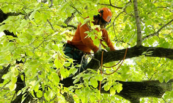 Tree Trimming in Bradenton FL Tree Trimming Services in Bradenton FL Tree Trimming Professionals in Bradenton FL Tree Services in Bradenton FL Tree Trimming Estimates in Bradenton FL Tree Trimming Quotes in Bradenton FL