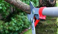 Tree Pruning Services in Bradenton FL